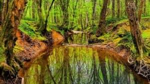 longoz ormanlari